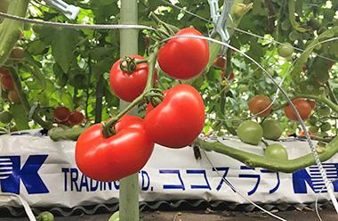 【JA東京中央会】収穫の秋、味覚の秋、都市農業の秋!~アグリパーク オータムフェア~
