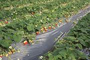 東京産野菜フェア